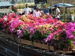 Flower growers hope to reap Tết rewards