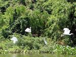 VITM 2019 to highlight Green Tourism