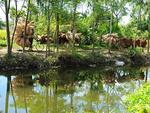 Visiting a 200-year-old fish trap weaving village