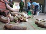 Prevention of illegal wildlife trade remains a tall order