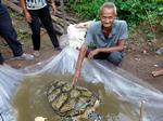 Endangered sea turtle found in fishing net