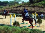 Olympic horse riding club opens in Lâm Đồng