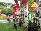 Tao Đàn Spring Flower Festival opens