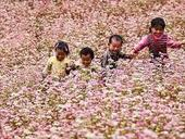 Buckwheat flower festival in Hà Giang