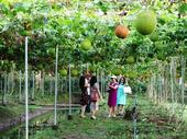 Agri-tourism attracts more visitors to Mekong Delta