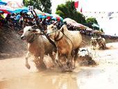 Tourism potential of Mekong Delta region introduced at VITM