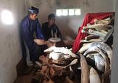 Lý Sơn Island to restore giant whale skeleton