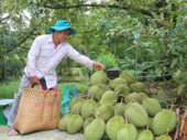 Delta fruit farmers see bumper harvest, high prices