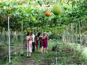 Trips to southern orchards popular in summer for urbanites