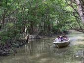 Take amangrove-forestboat trip in Cà Mau