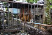#ENDWILDLIFECRIME Initiative Aims to End Wildlife Crime - For Good.