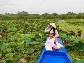 An Giang, southern provinces work to revive tourism sector