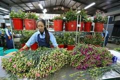 Đà Lạt to open flower trading centre