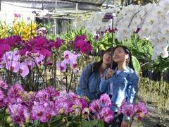 Delta's colourful Sa Đéc flower village