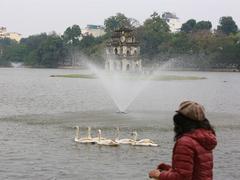 Hà Nội introduces swans to Hoàn Kiếm lake