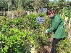 Growing medicinal plants brings big profits
