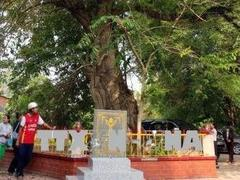 Queen's crape myrtle trees in An Giang recognised as VN Heritage Trees