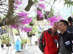 Orchid exhibtion in Lai Châu Province