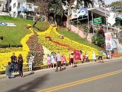 Đà Lạt preparesfor flowerfestival