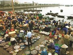 Fishy delights in Quảng Ninh