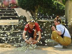 Butterfly season in Cúc Phương