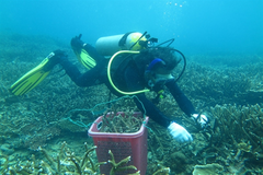 Côn Đảo conservationists take steps to save coral