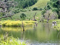 Discovering wild and charming Noong U Lake in Điện Biên
