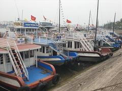 Cruise ship owners in Quảng Ninh request halt to operations