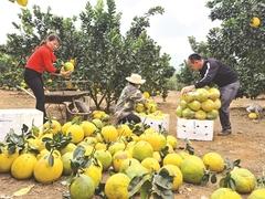 Sơn La combines tourism and agriculture