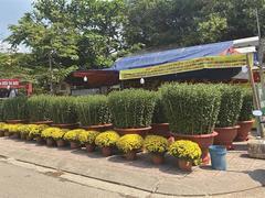 HCM City kicks off Tết ornamental plant market