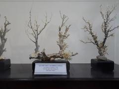 Scientists complete collection of sea creature specimens in southern Việt Nam