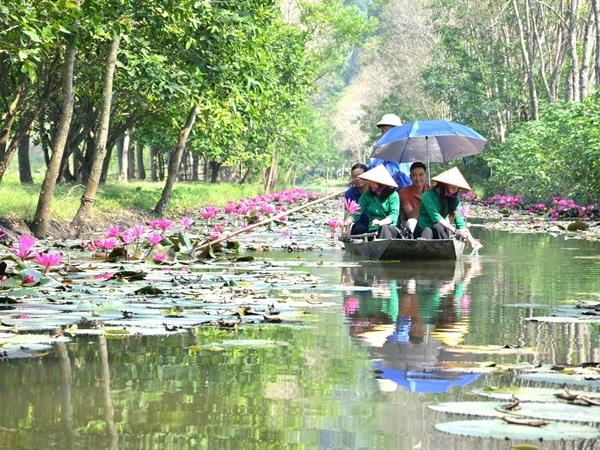 Visit Ấu Stream to harvest caltrops and enjoy peaceful scenery