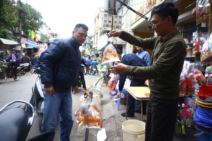 Tết starts as people release carps for Kitchen Gods